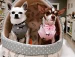 piccoli monelli dog boutique