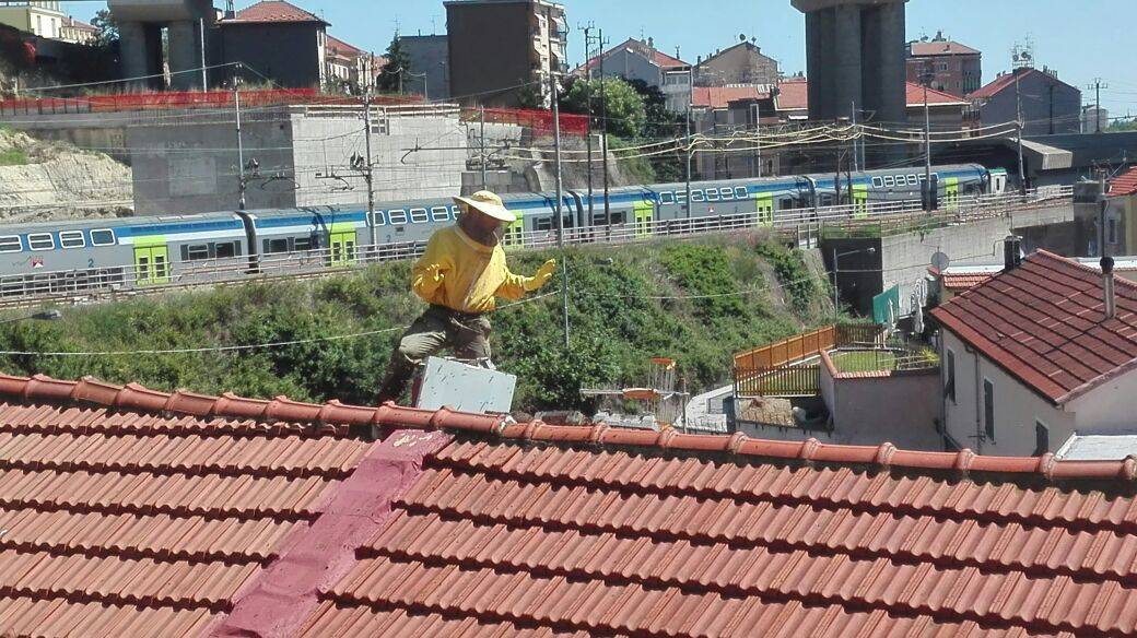 "Sciame di 150 mila api ""mette su casa"" in via Repusseno a Savona"