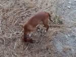 Avvistato cane con collare a Finale Ligure in torrente Pora