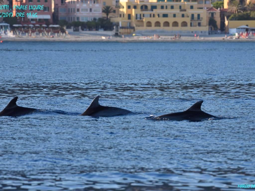Delfini avvistati tra Finale e Varigotti