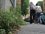 Erbacce invadono marciapiedi e muri dei quartieri