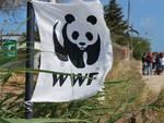 WWF bandiera