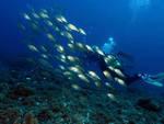 Escursione guidata di snorkeling alle falesie di Torre del Mare