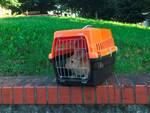 Coniglio ENPA Savona giardini via Trincee