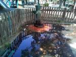 Fontanella via Colombo Savona dispersione acqua