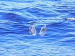 I giganti del mare prediligono la Baia del Sole