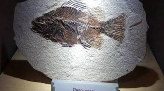 Museo Geopaleontolgico Silvio Lai Peagna Ceriale