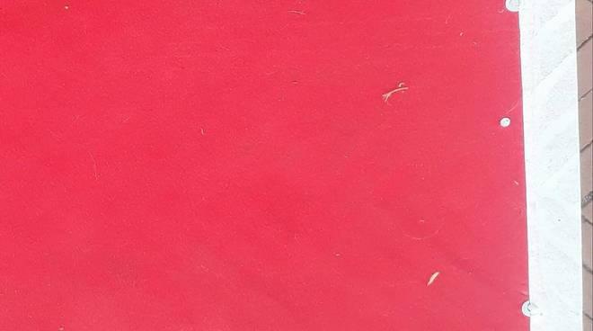 red carpet nervi
