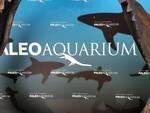 virtual tour acquario