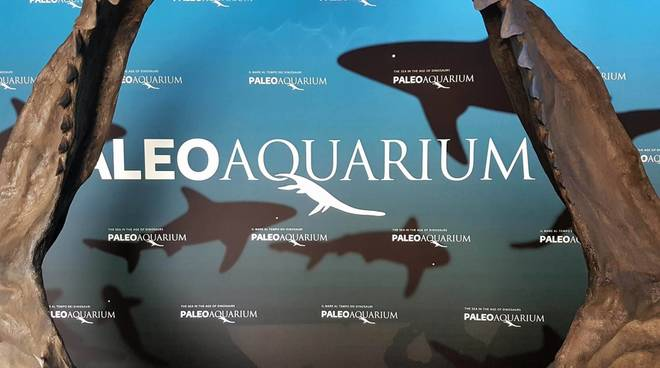 virtual tour acquario