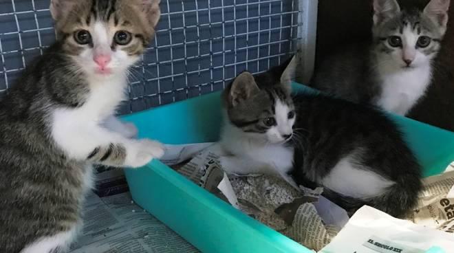 Gattine Urbe Enpa