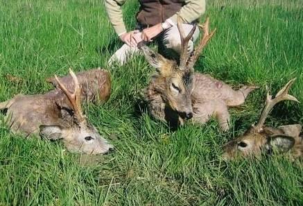 caccia capriolo