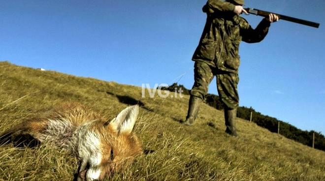 """CACCIA, MOVIMENTO ANIMALISTA: \""""NOI UNICO RIMEDIO CONTRO LA TOTALE INDIFFERENZA DELE ISTITUZIONI\"""""""