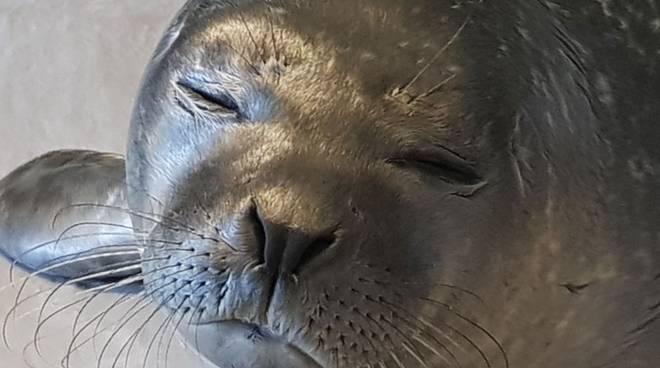 cucciolo foca acquario