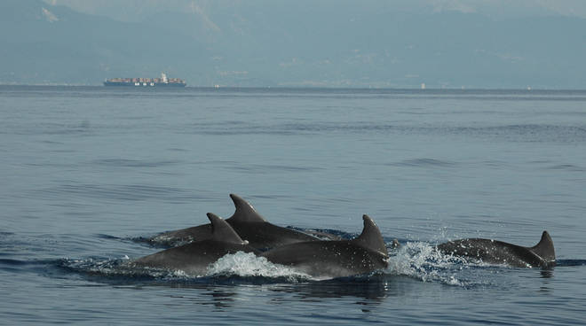 delfini metropolitani