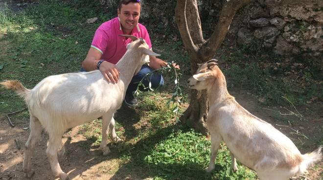 In corso l'Eid al-Adha o Festa del sacrificio, associazioni animaliste contro