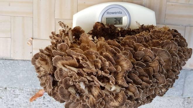 funghi beuscen
