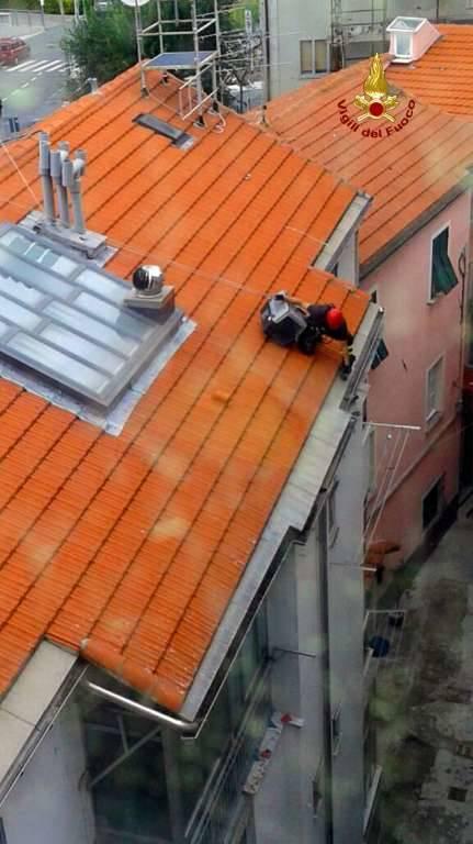 Piccione incastrato in una grondaia a Vado Ligure