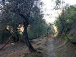 camminata ulivi andora