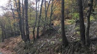 carabinieri nel bosco bardineto