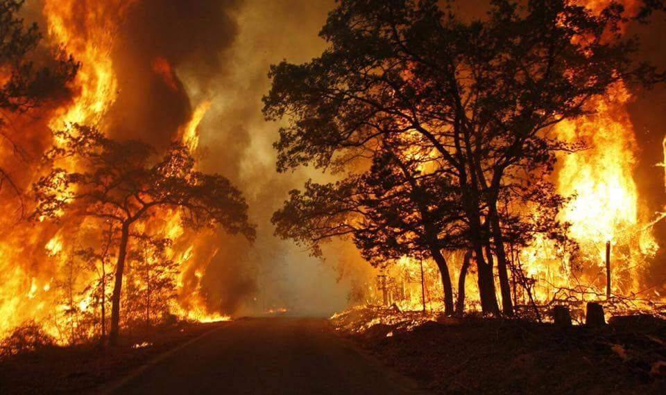 incendi piemonte