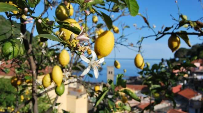 limoni cinque terre