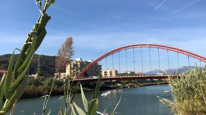 Pulizia fiume Centa