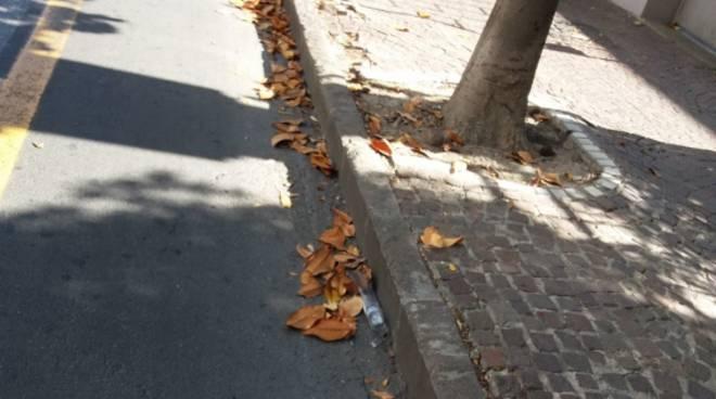 Sporcizia foglie via Trieste Albenga