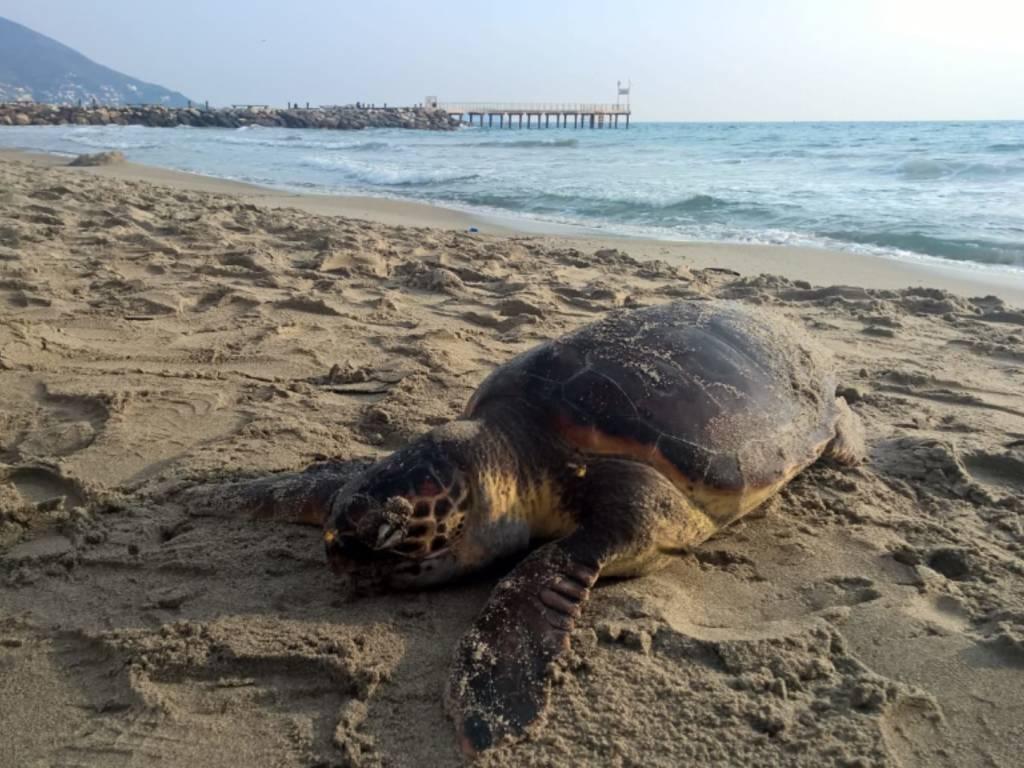 tartaruga spiaggiata
