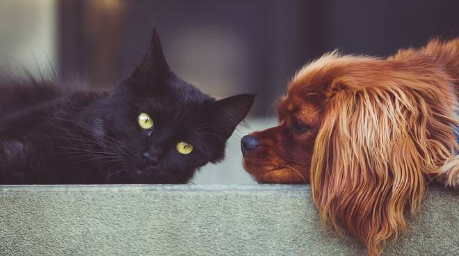 cani e gatti adozioni