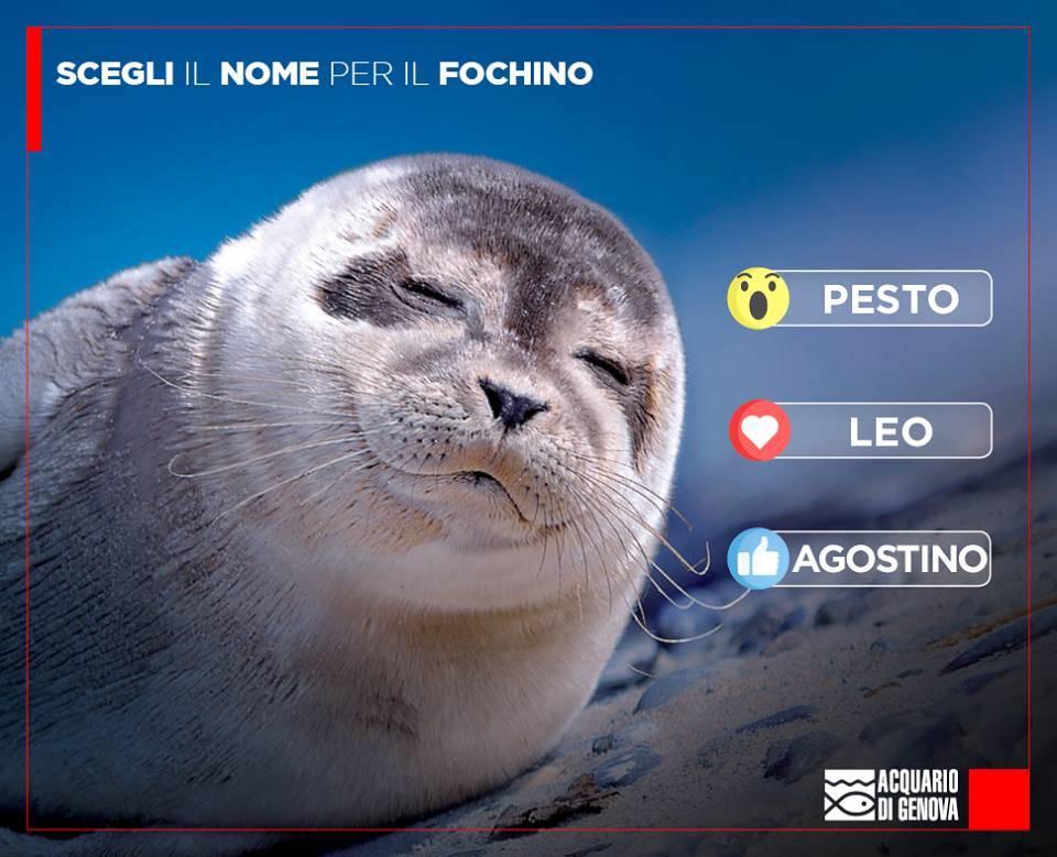 fochino