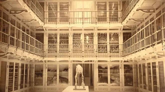 museo giacomo doria