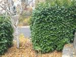 plodio area verde barla