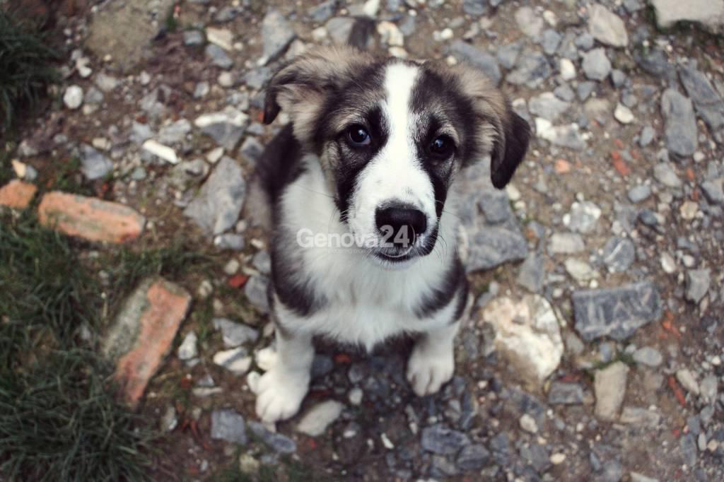portamiacasa cani