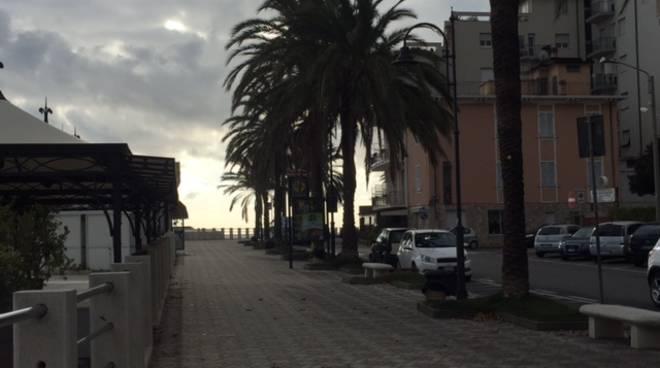 Pulizia e potatura palme Albenga