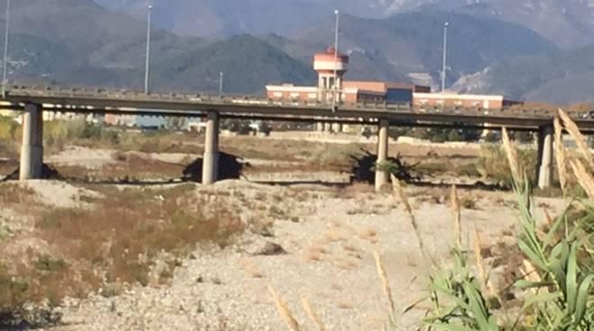 Ramaglie ponti autostrada Albenga