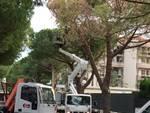 Abbattimento pino pericolante via Einaudi