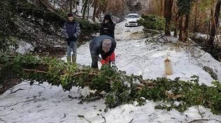 alberi caduti neve ghiaccio maltempo
