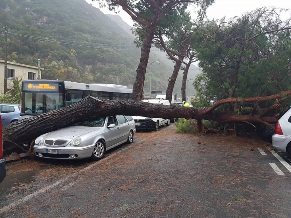 albero caduto