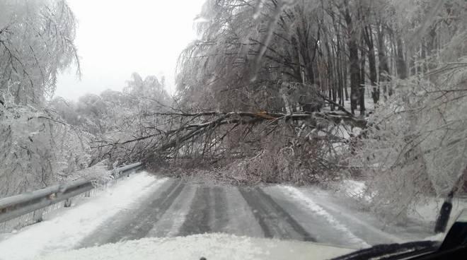 albero caduto neve ghiaccio