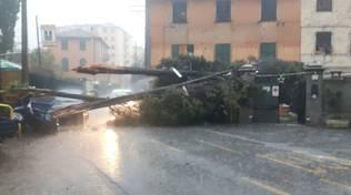 albero caduto struppa