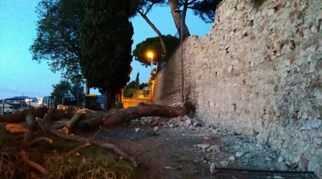 albero caduto via cornice