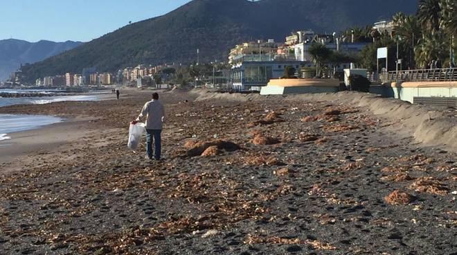 Loano operazione pulizia spiagge mareggiata