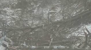 masone gelicidio laura zampe nel bosco