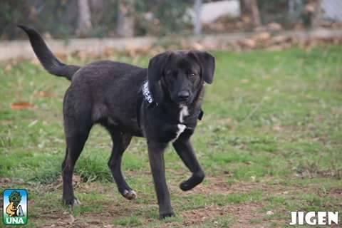 Monte Contessa annuncio adozioni 12 dicembre