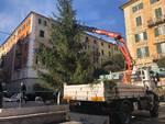 Savona Albero Piazza Sisto