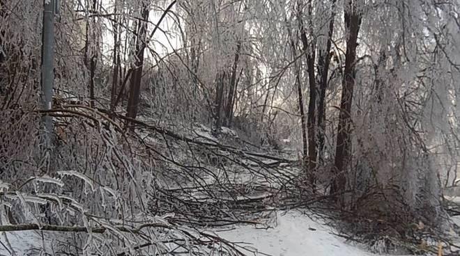alberi rotti per gelicidio dicembre 2017