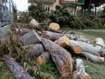 Borghetto, Maritano e Oliva all'attacco sulla gestione del verde pubblico