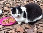 Gatti Savona raccolta solidale cibo
