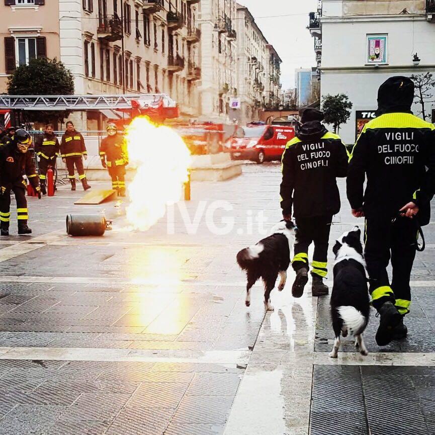pompieropoli piazza sisto cinofili vigili del fuoco